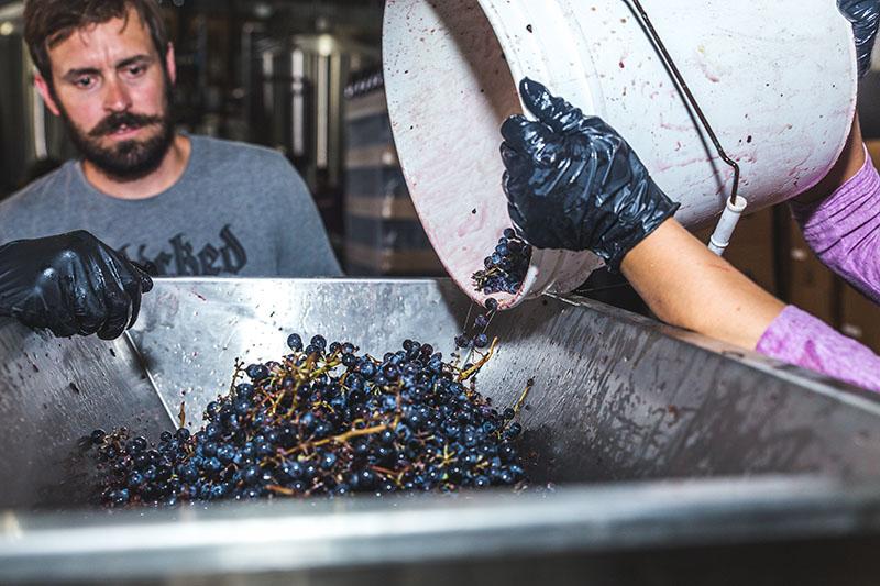 Jeffrey Stuffings, da Jester King, durante a produção da biÈRE de Lenoir, sour refermentada com uvas (Foto: Divulgação)