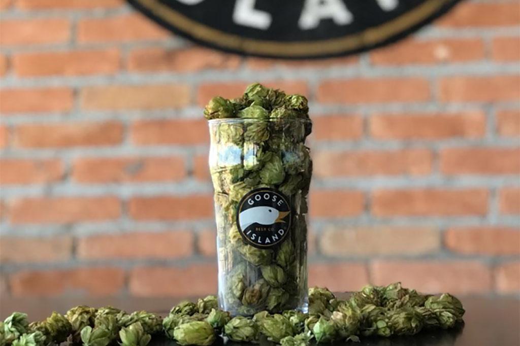 Cerveja ganhará versão em lata, em um projeto inédito da cervejaria no Brasil (Foto: Divulgação)