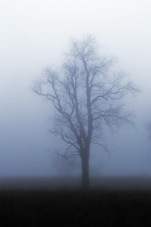 fog3w.jpg