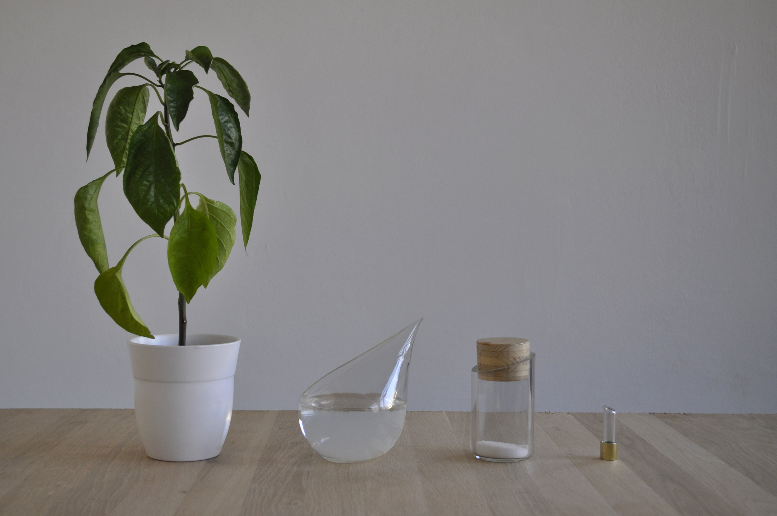 Thriving of your plants