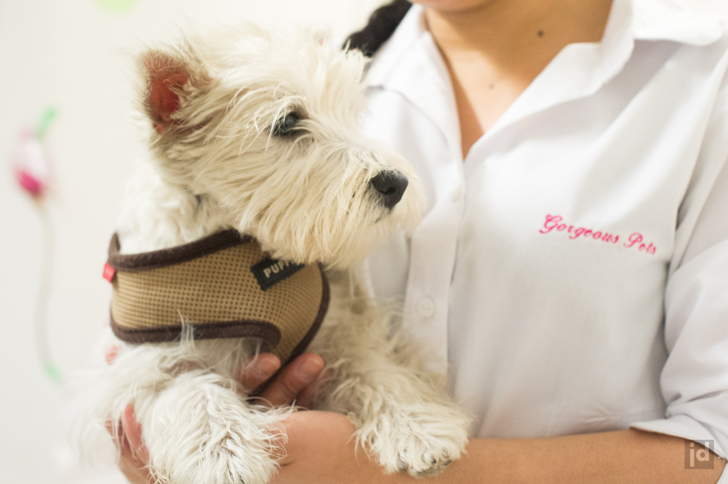 Gorgeous Pets Dog Grooming - 1