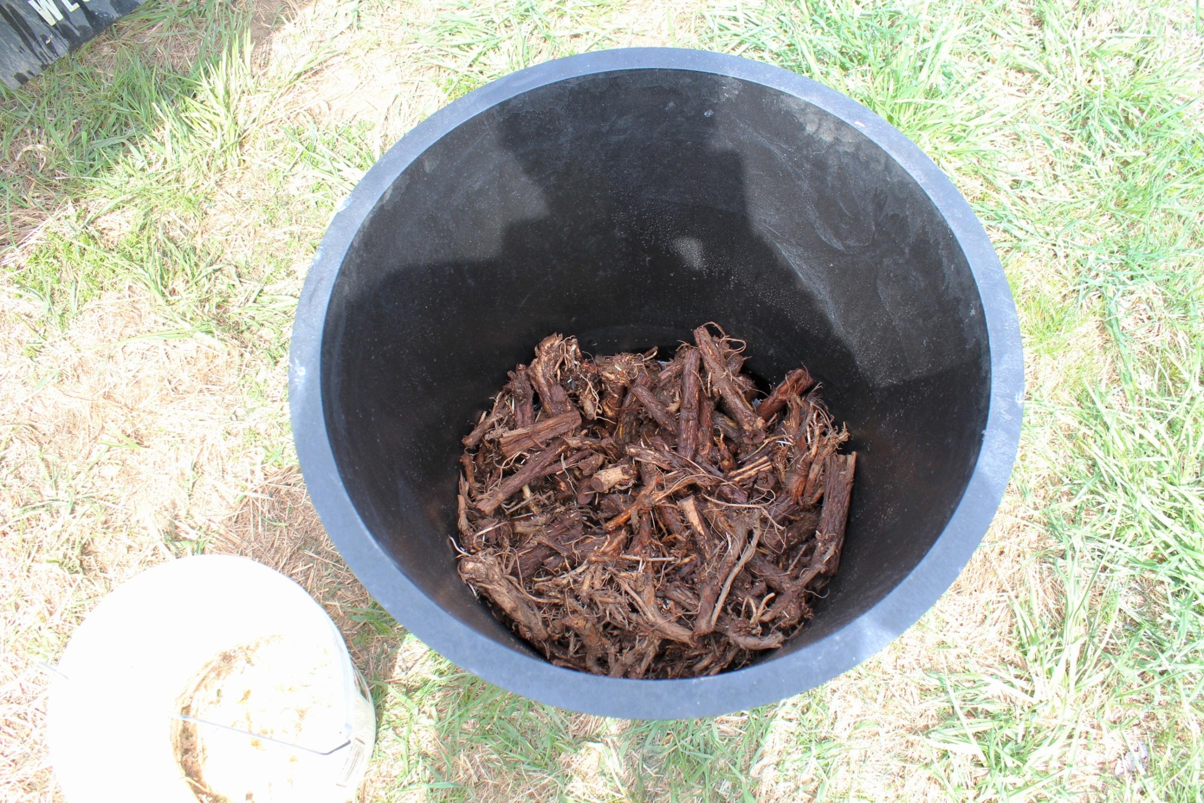 Hop rhizomes ready for planting