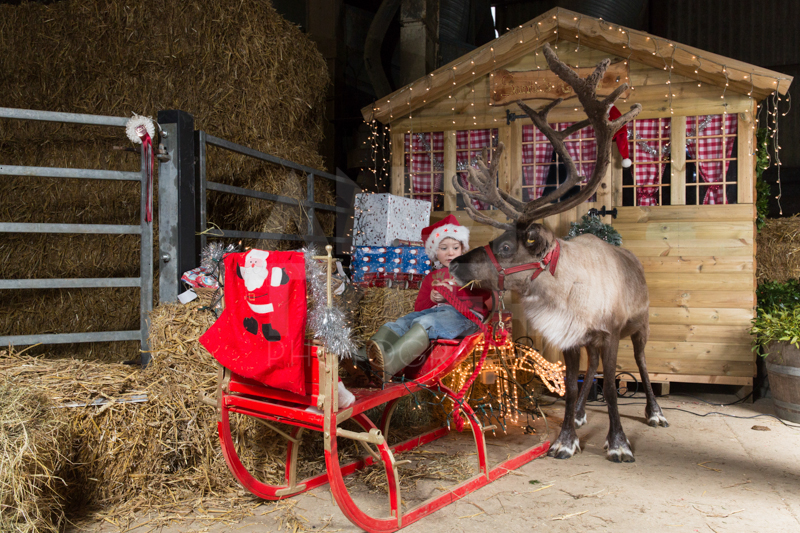 Wimdu Claydon Christmas Tree Farm-1525-Edit.jpg