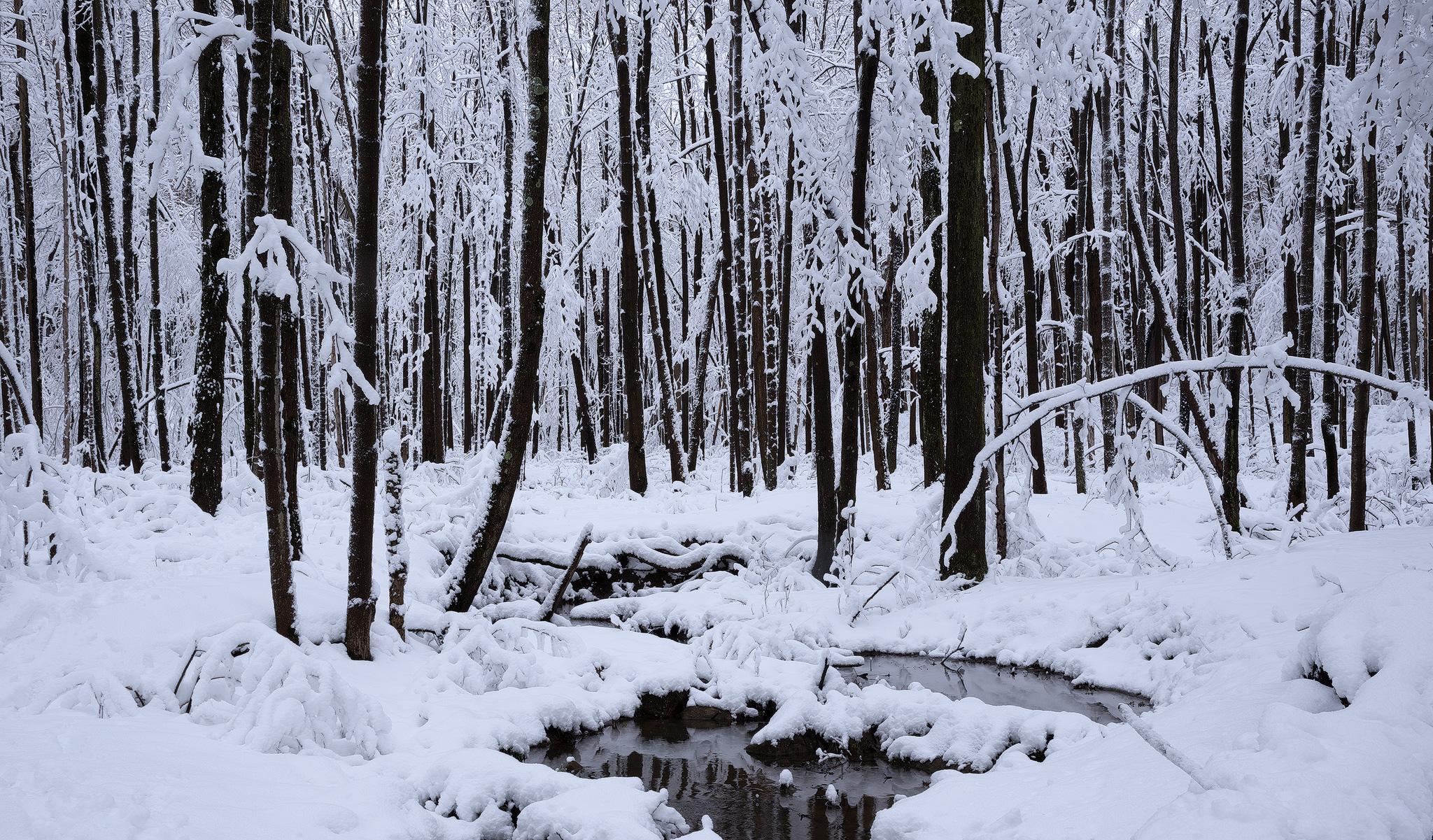 Cottonwoods-copy.jpg