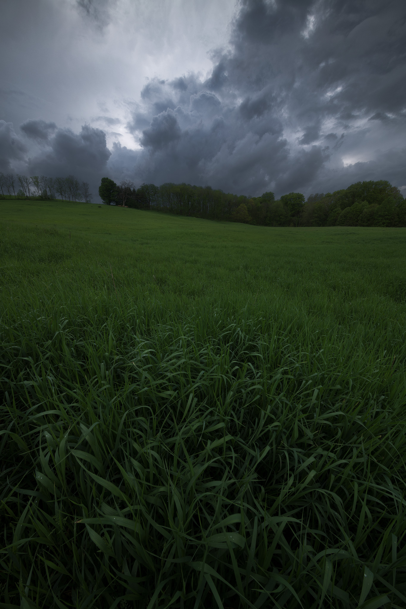 Stormy spring weather on a walk near my home with the family. The ultrawide 11mm perspective lends itself well to creating depth out of any repeating patterns.