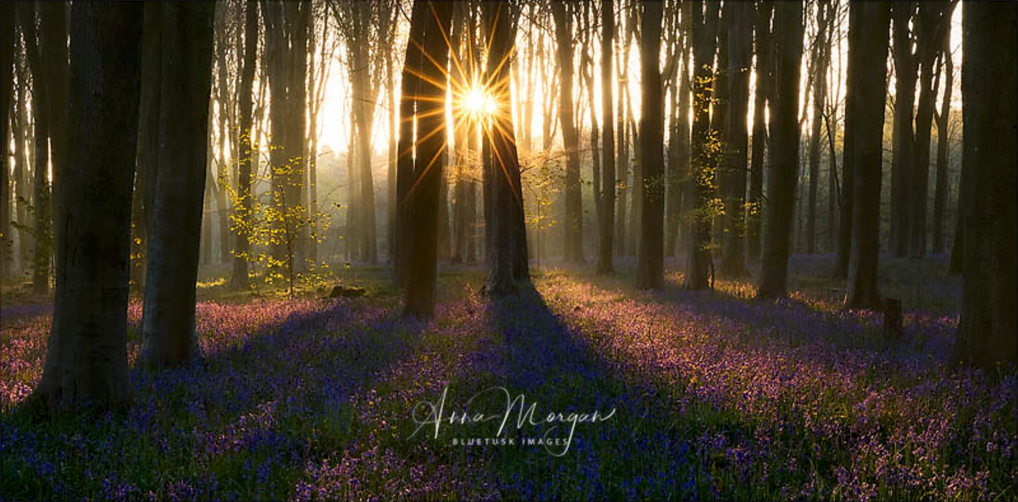 """""""Convergence""""- Anna Morgan. Perfect carpet of flowers, fog, and a sunstar. Wait, a DOUBLE sunstar? Are you kidding me?!?The atmosphere is classy but ethereal, a hallmark of her collection."""