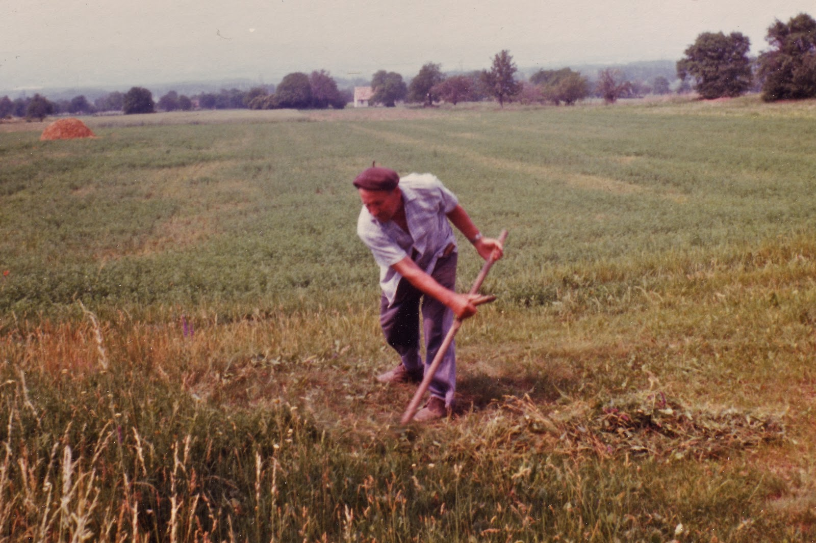 My grandfather scything feed for the rabbits - a photo I took in the mid to late 70's