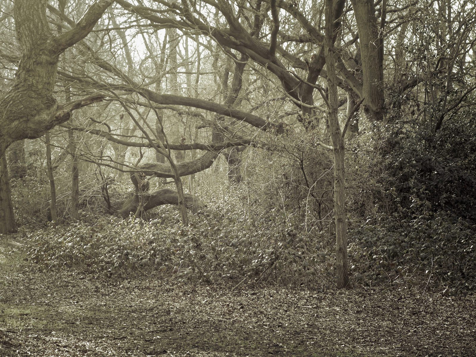 Epping Forest, north east of London
