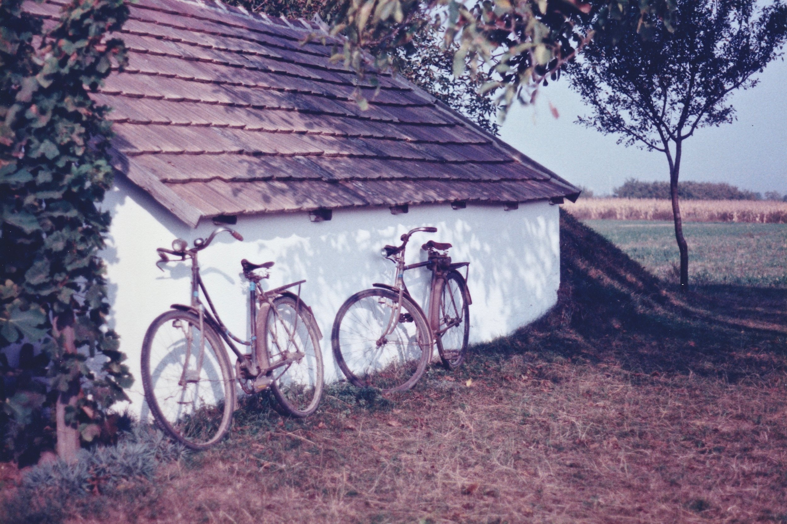 Grandparent's bicycles in the vineyard