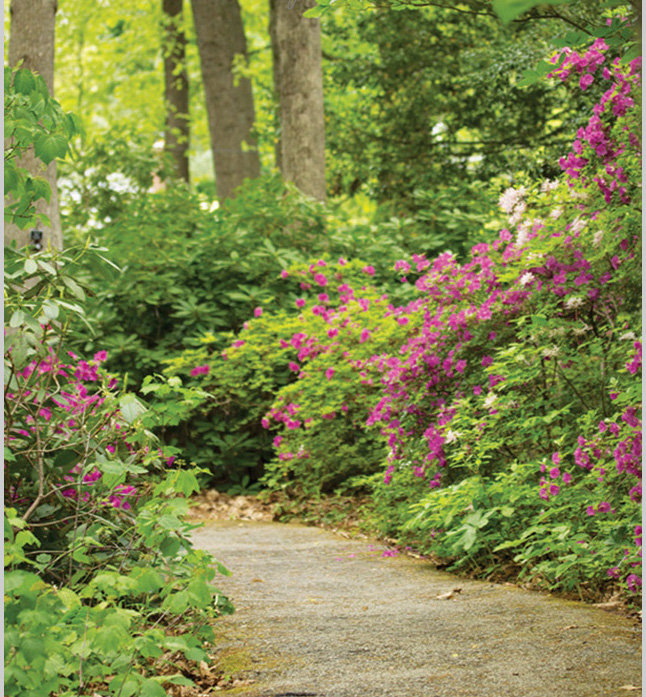 Walking Trail Collection-web.jpg