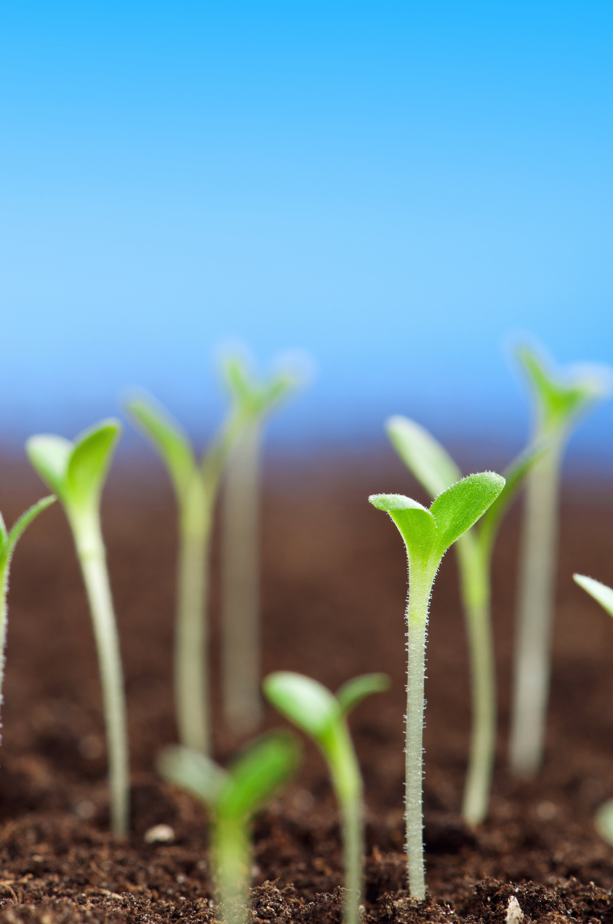 growth plants abstract stock.jpg