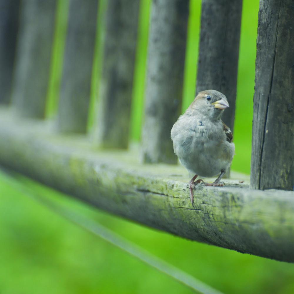 sparrowLadder.jpg