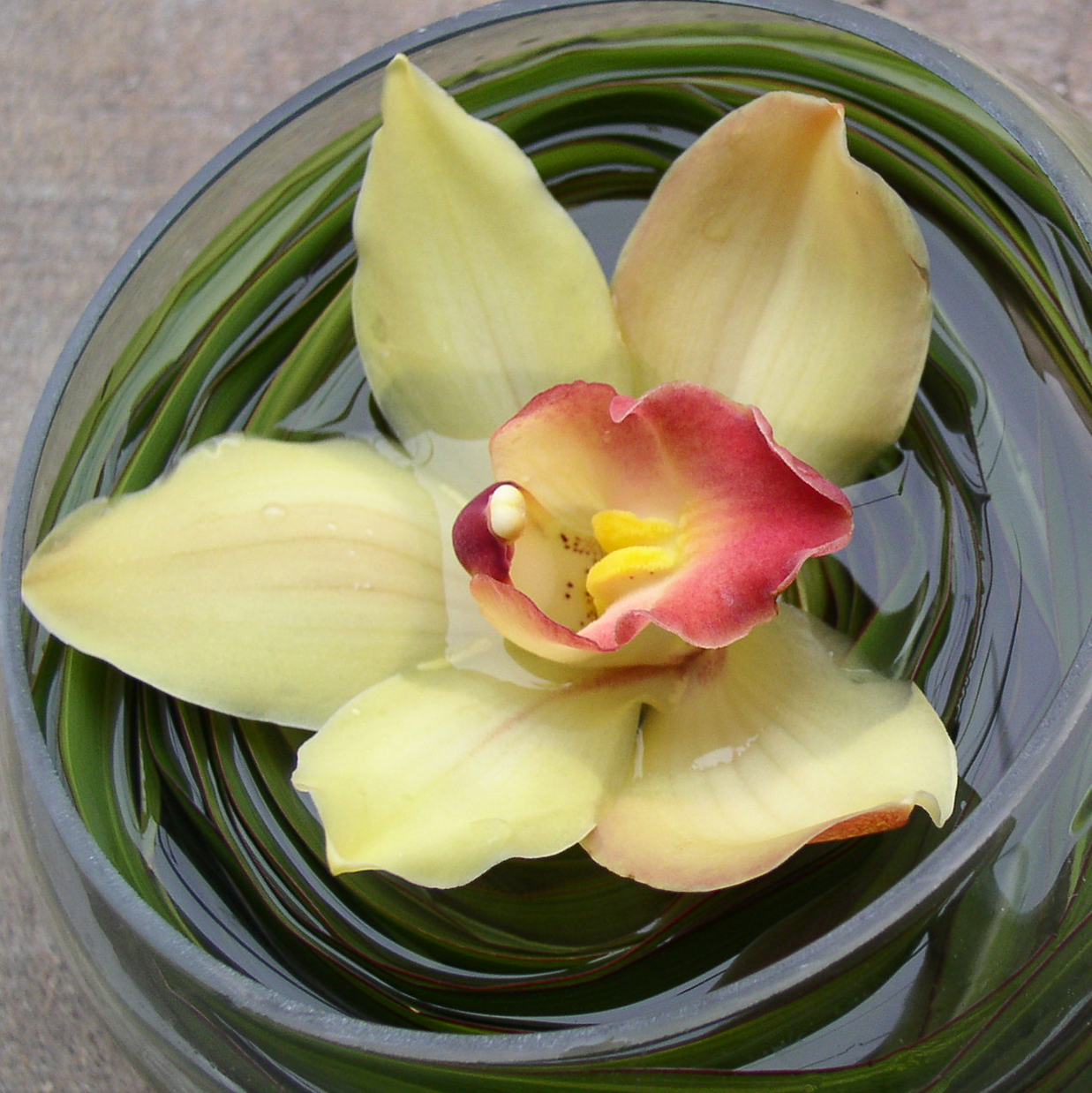 cropped orchid.png