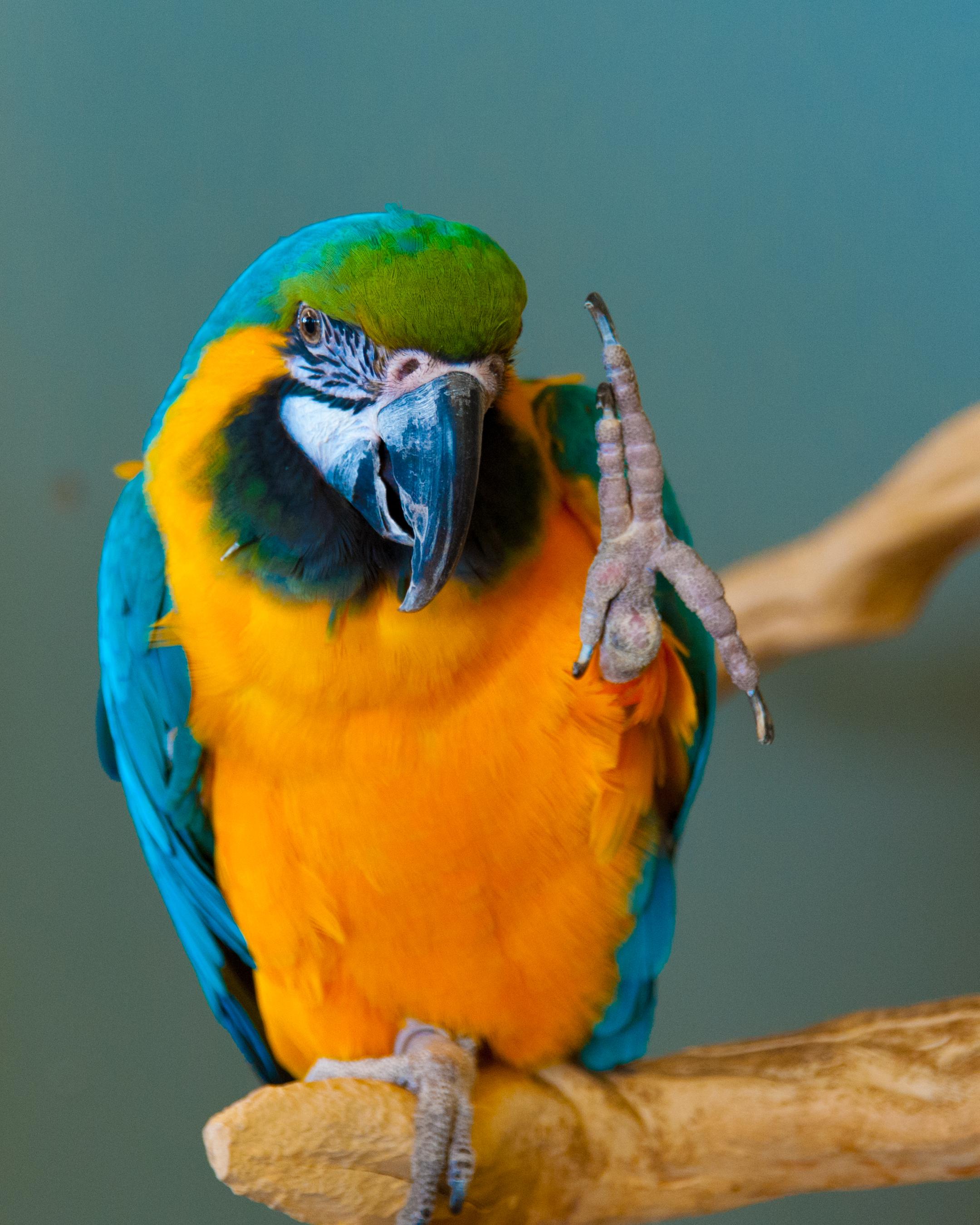 Parrot at Bird Kingdom