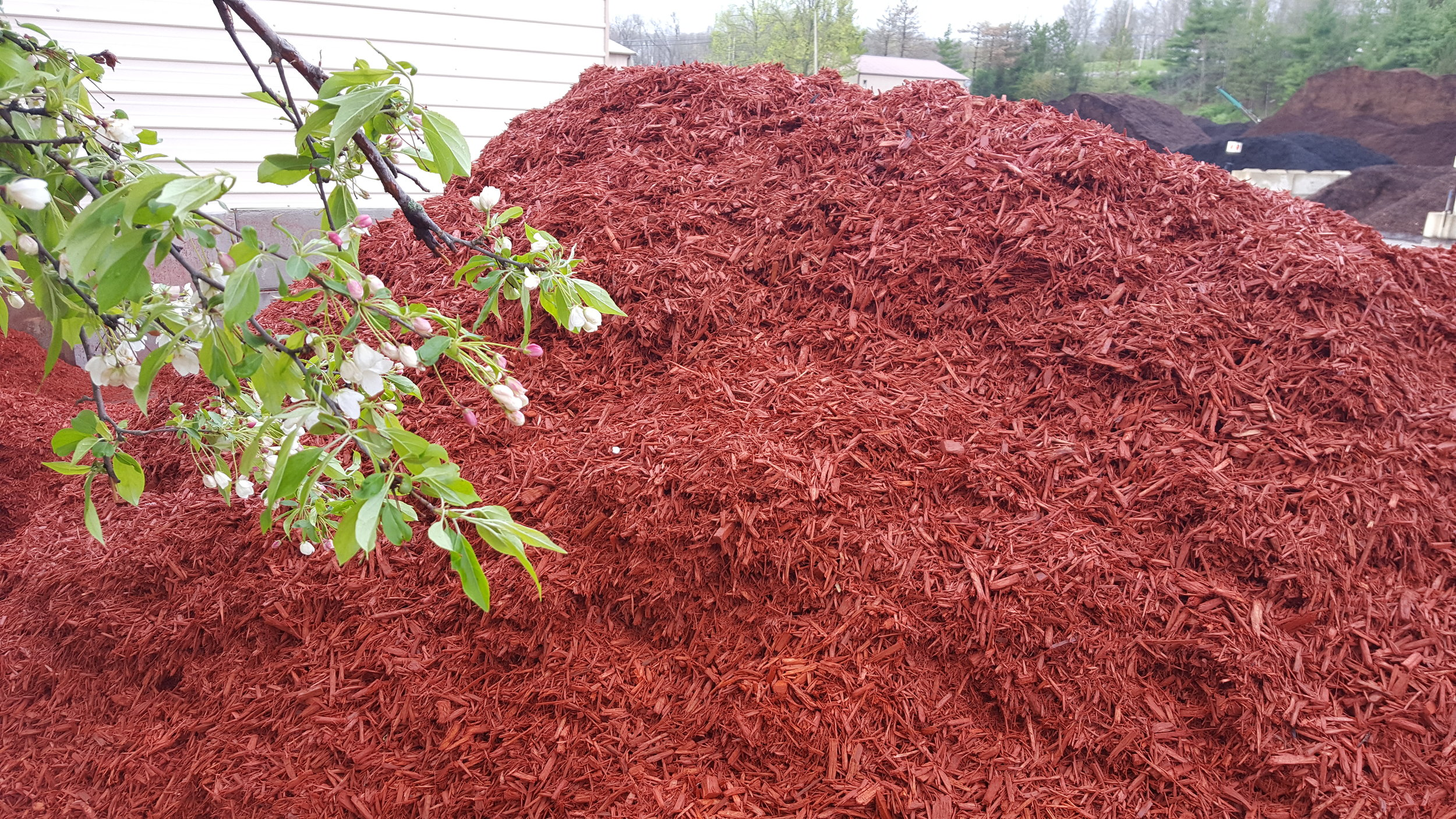 Red dyed mulch in Ohio