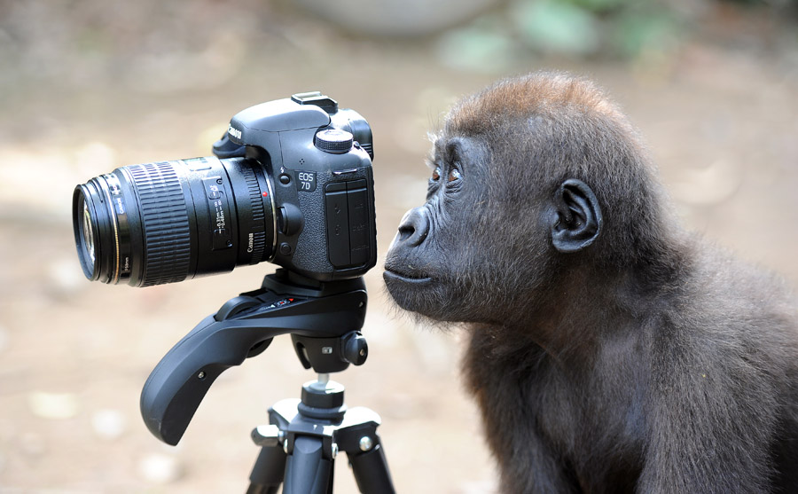 Lucy's second favourite thing to photograph is primates and monkeys, if only they would go underwater!