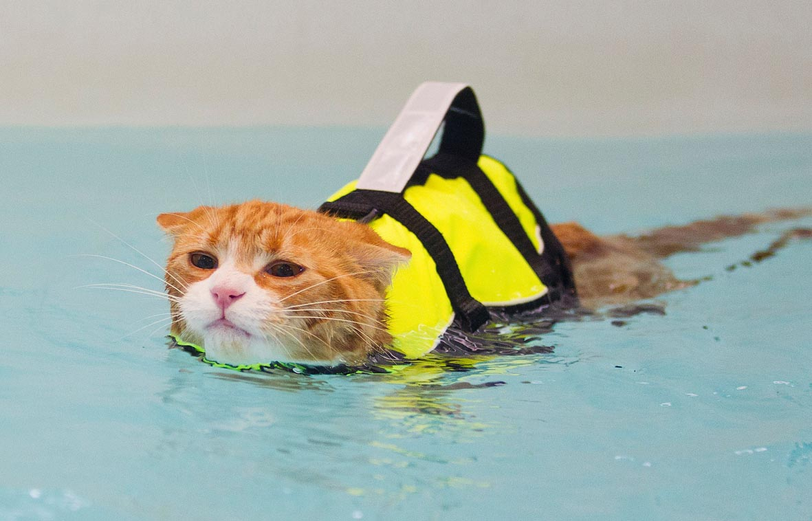 Roy the swimming cat by Lucy Ray/Starfish Underwater Photography