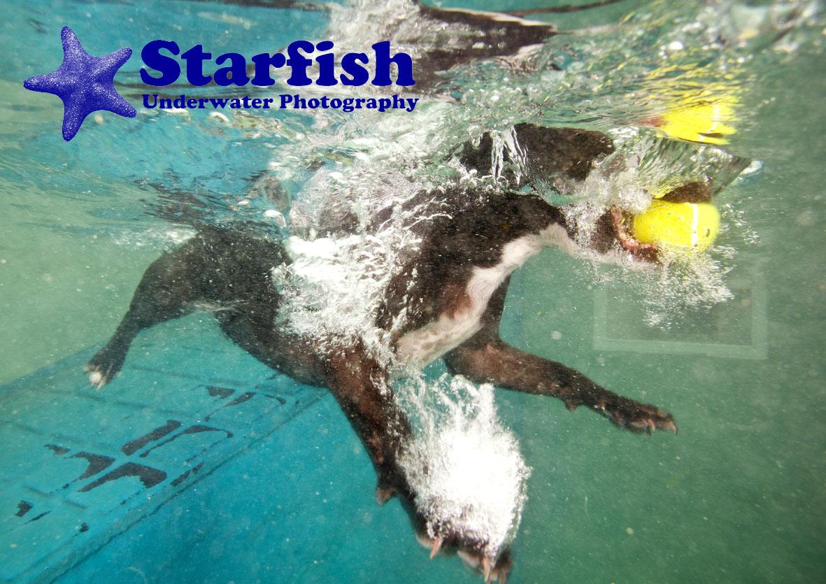 Underwater dog photography UK