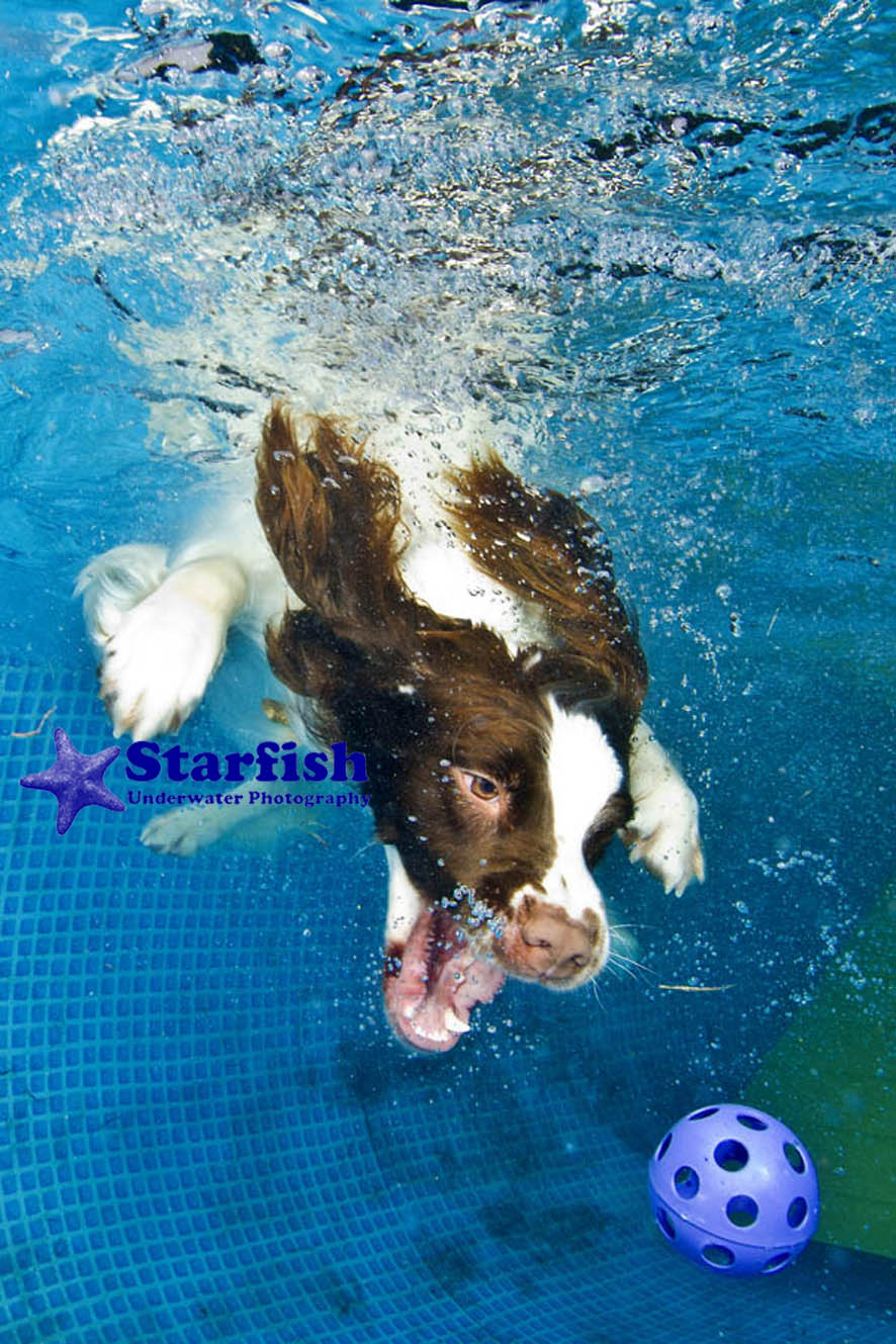 NWS-LRY-DashnSplashDogs22