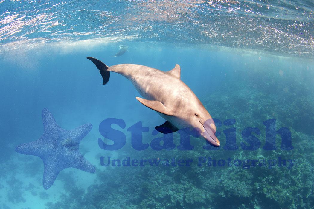Red Sea32.jpg