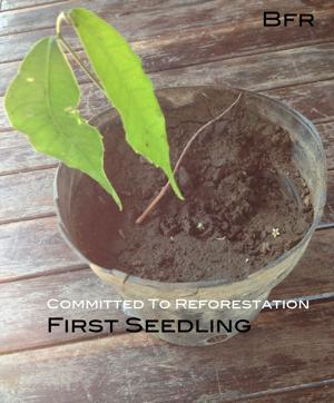 first.seedling.jpg
