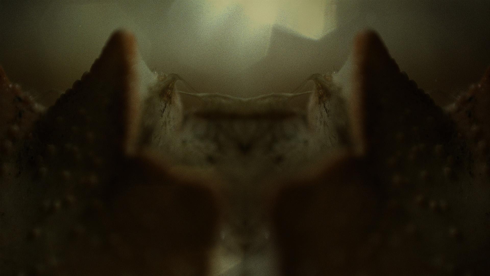 Macro_Crab_Legs_Stills_16.jpg
