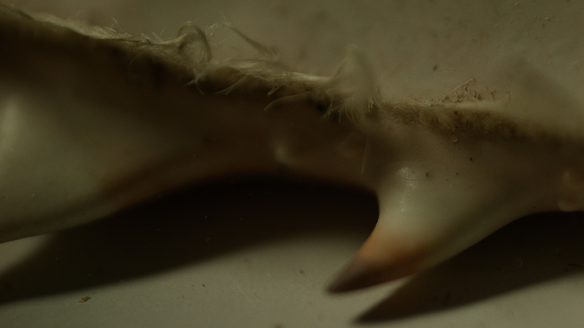Macro_Crab_Legs_Stills_19.jpg