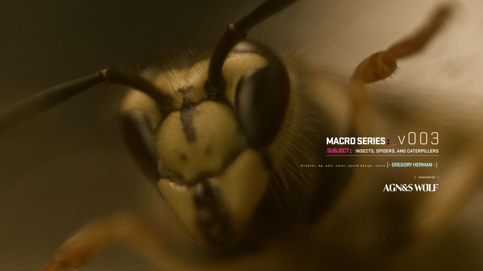 01_macro_series_v3_0b.jpg