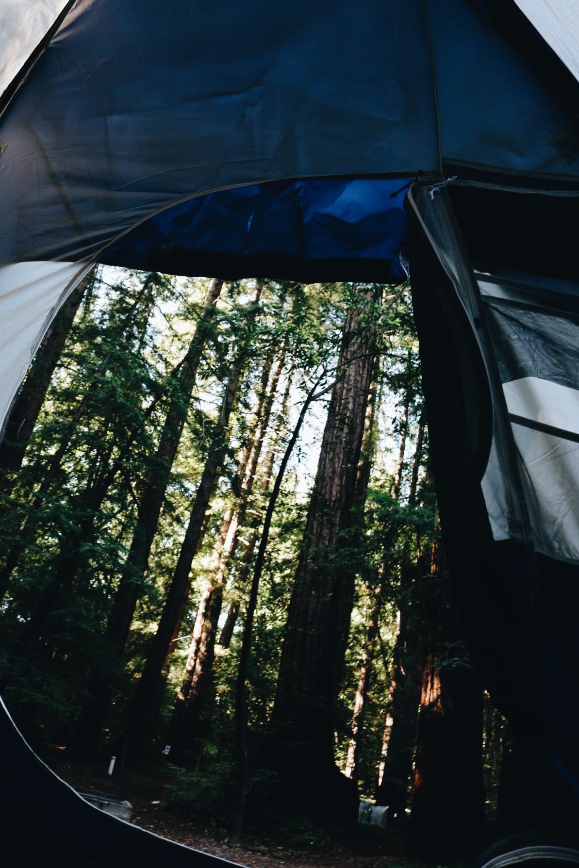 Tent views in Pfieffer Big Sur State Park.