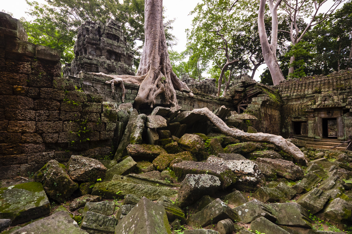 Ta Prohm is in much the same condition in which it was found. With the trees endless roots looking more like coiling reptiles than plants. Angkor, Cambodia
