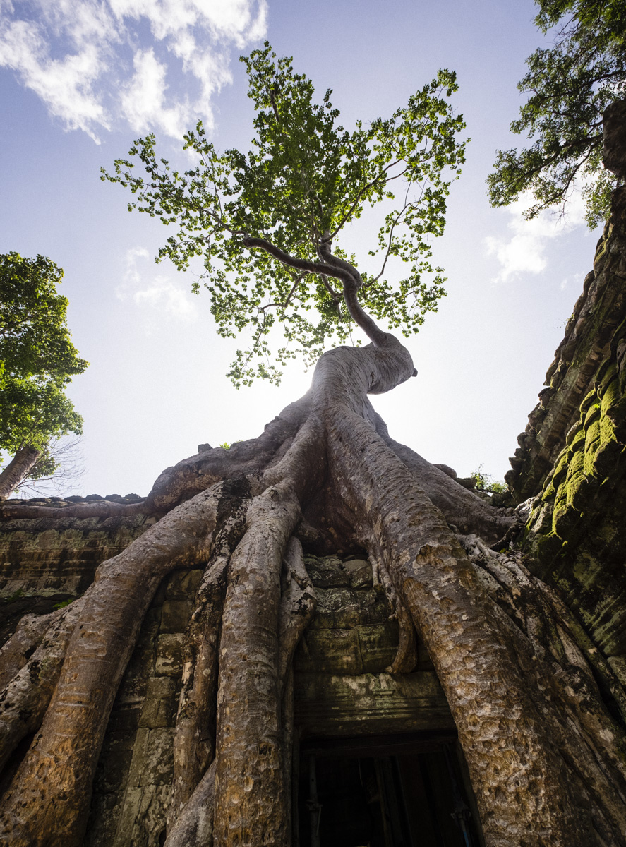 Ta Prohm is incredibly photogenic and atmospheric combination of trees growing out of the ruins, have made it one of most iconic Khmer temples. Angkor Cambodia.