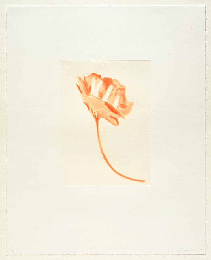"""Valerie Hammond  Flower , 2013 Spit bite etching 18"""" x 14.5"""" paper, 9"""" x 6.5"""" print Retail Value: $650 Opening Bid: $200"""