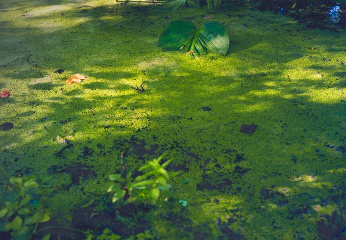 swamp, 2001