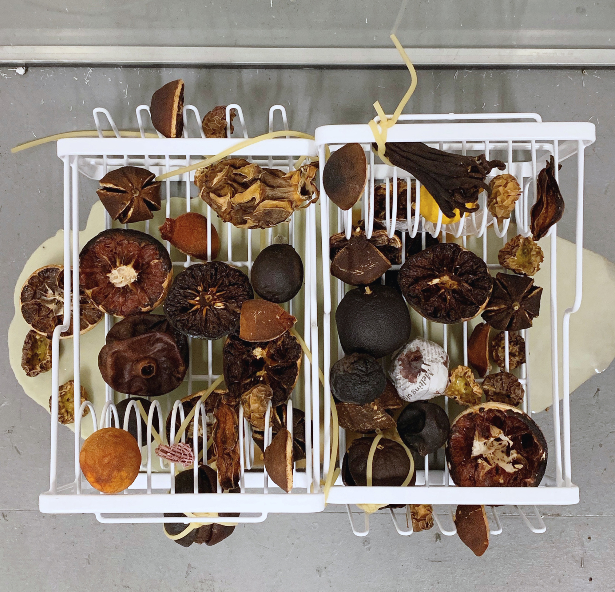Seeking The Common Ground  (detail) 2019 Mini freezer, handmade popsicles with newspaper confetti, dish racks, preserved tropical fruit, frozen cube fruit, plant lights  18 x 19 x 27 inches