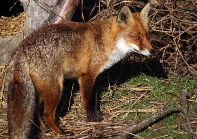 WILD ANIMALS also call Meher Mount home. (FreeDigitalPhotos.net)
