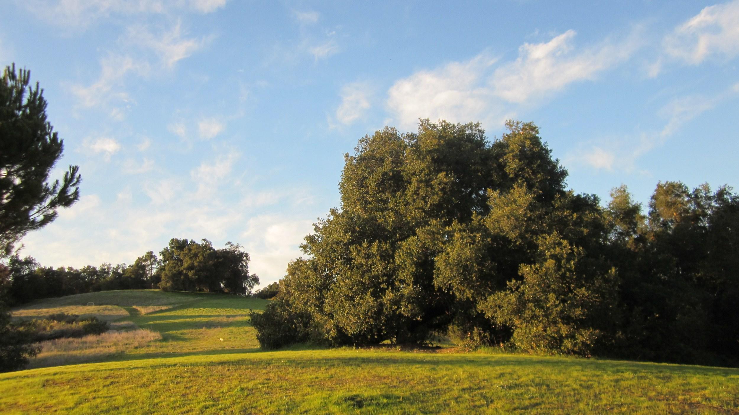 BABA'S TREE viewed from Avatar's Point. (Wayne Myers photo, 2013.)