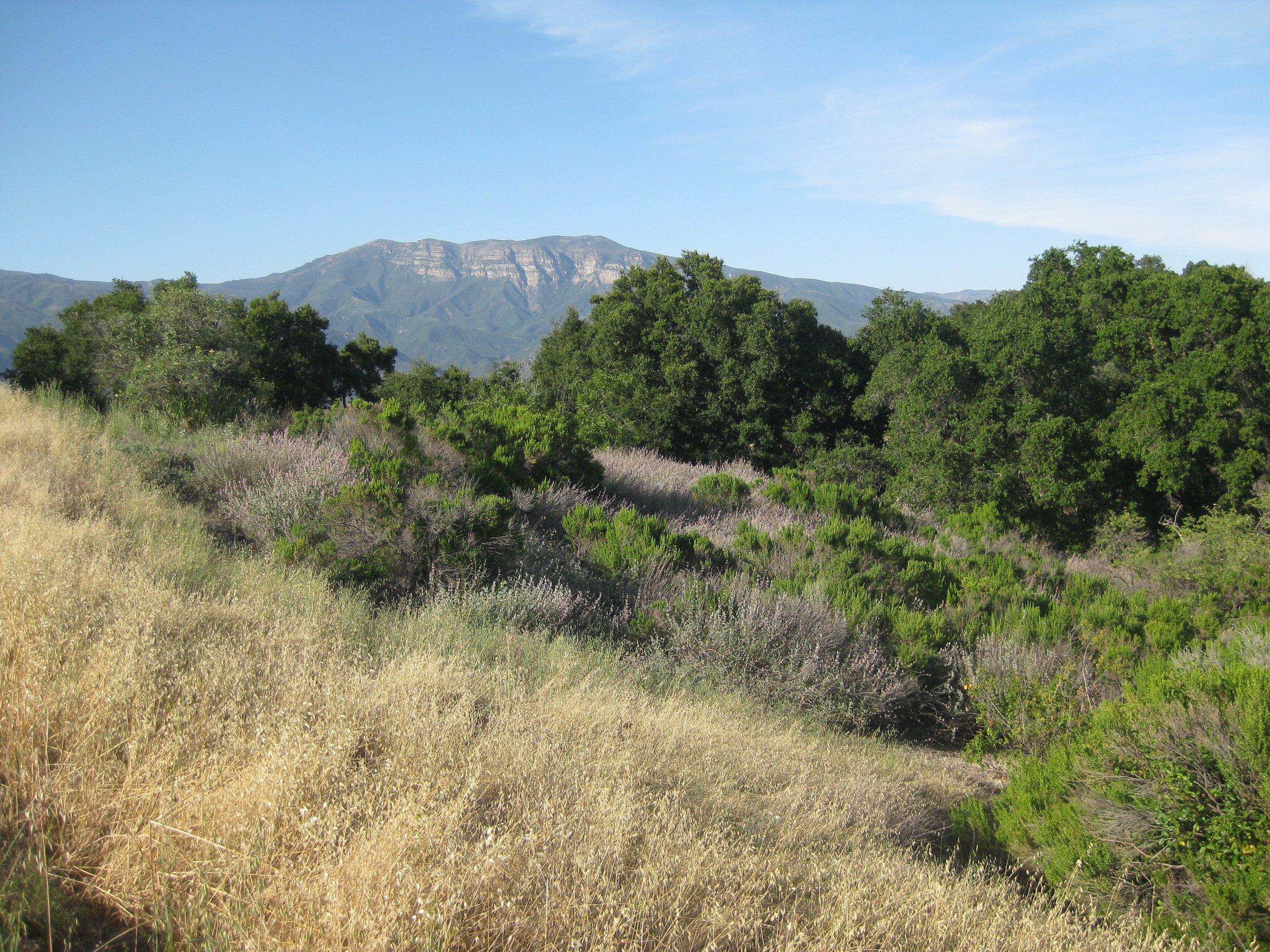 SUMMERTIME AT MEHER MOUNT with a view of the Topa Topa Bluffs. (Leslie Bridger photo, June 2011.)