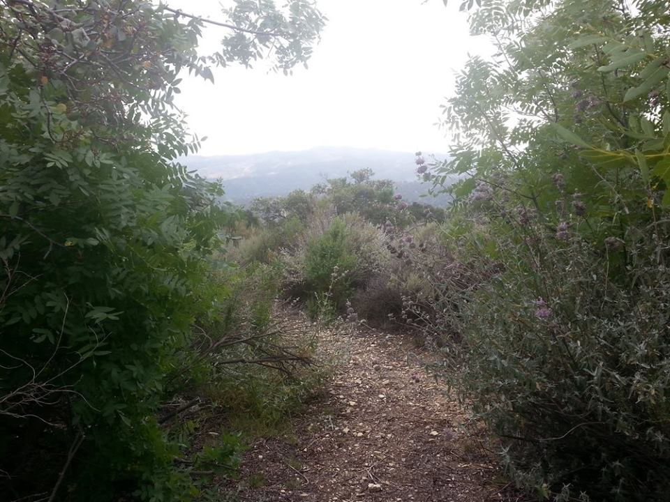THE PRASAD ORCHARD TRAIL created during a Young Adult Sahavas at Meher Mount. (Photo: Stephanie Ervin, 2015)