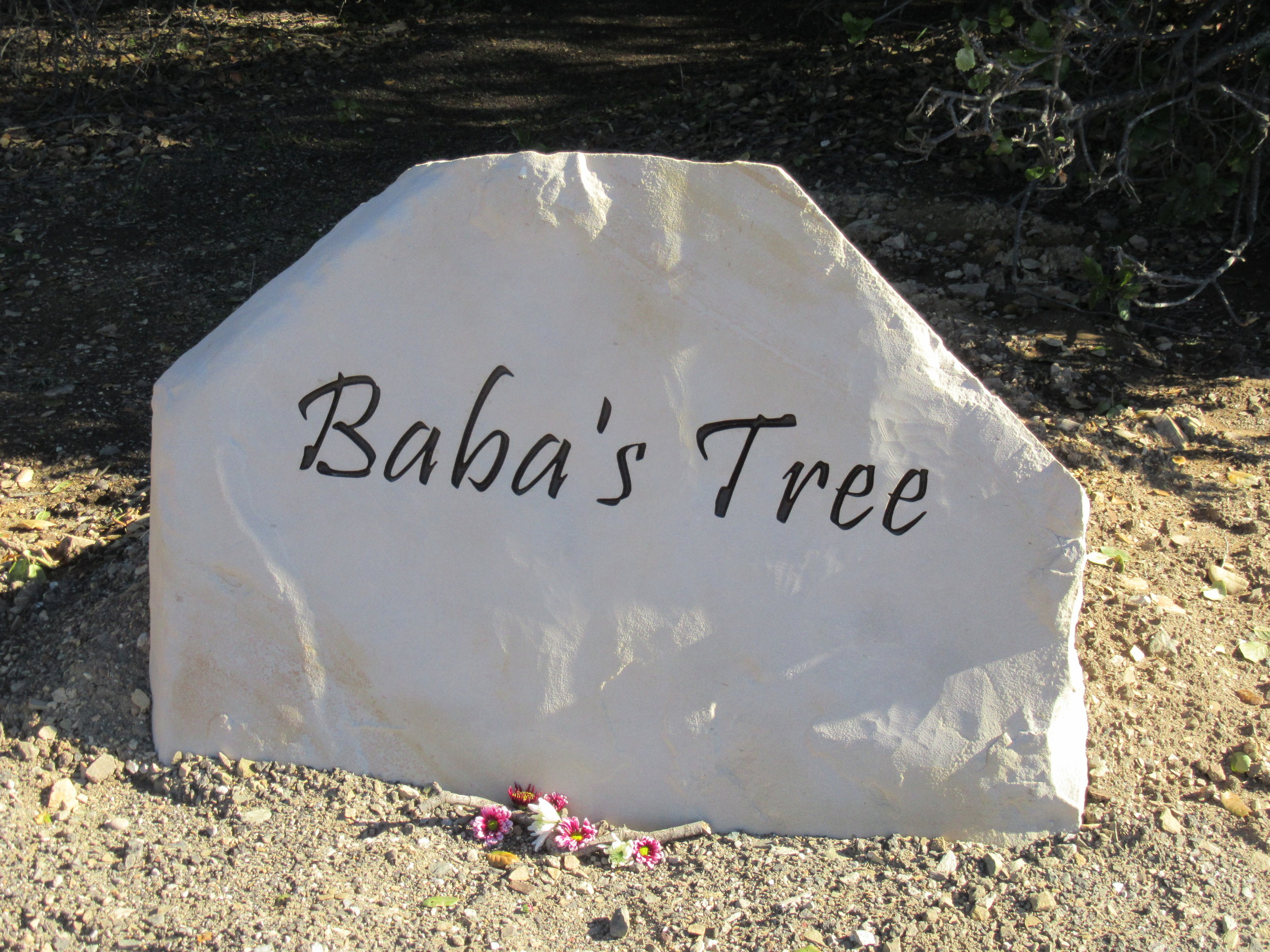 BABA'S TREE at Meher Mount is a touchstone for most visitors who often find inspiration, solace and rejuvenation under the Tree. (Photo: Margaret Magnus, 2017)