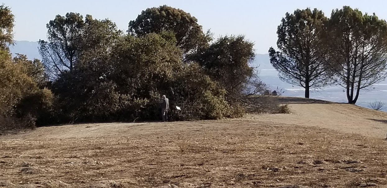 BYRON PINCKERT is taking photographs of Baba's Tree at Meher Mount after the 2017 Thomas Fire. The white spot to his right is the series of maps on which he is taking notes and marking the extent of the fire damage. (Photo: Margaret Magnus, December 21, 2017)