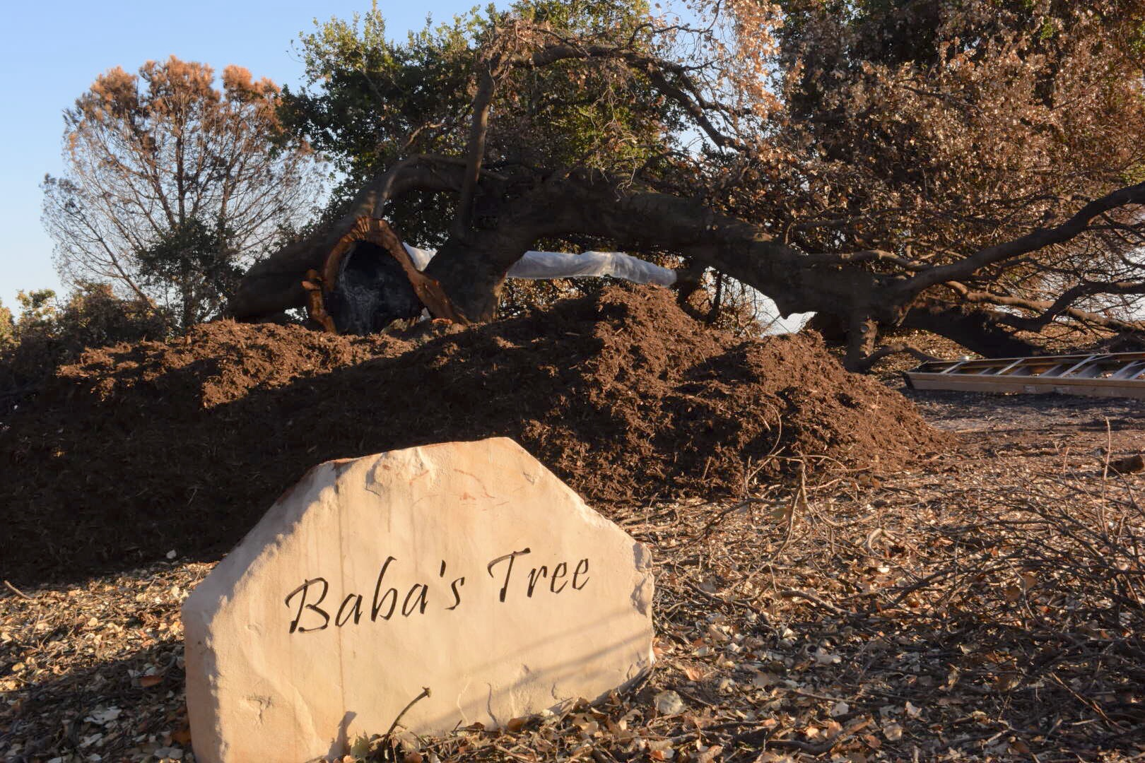 24-CUBIC YARDS of mulch waiting for the perfect volunteers to spread this compost around the trunk and under the canopy of Baba's Tree to help retain moisture and encourage living soil. (Photo: Ray Johnston, February 18, 2018)