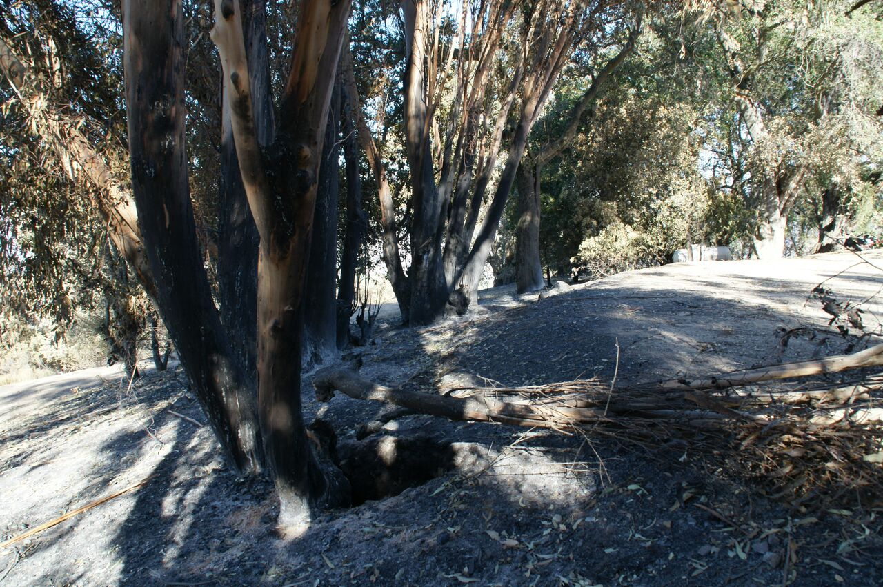 ASH FROM THE BURNED eucalyptus tree stand near Baba's Fireplace and the Visitor Center/Caretaker Quarters. (Photo: Byron Pinckert, December 21, 2018)
