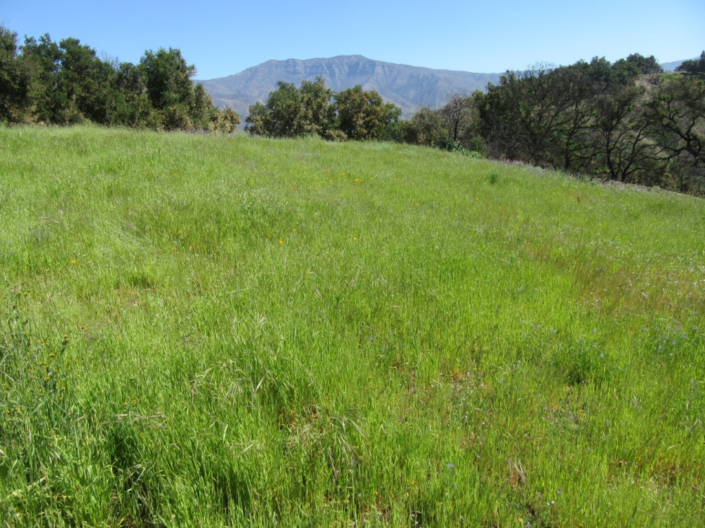 THE KNEE-HIGH grass looks lush now. By June 1, it turns brown and is a fire hazard. Come help prevent future fires and give the grounds at Meher Mount some much-needed tender loving care. (Photo: Sam Ervin, April 20, 2018)