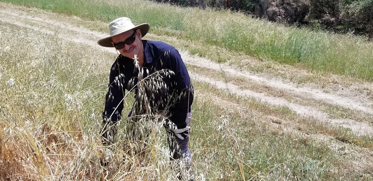 50 YEARS OF PULLING WEEDS. Sam Ervin celebrated the 50th anniversary of the first time he pulled weeds at Meher Mount - May 19, 1968. (Photo: Margaret Magnus, May 19, 2018)