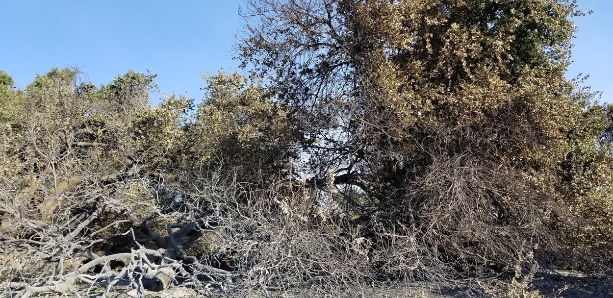 Baba's Tree - 12-12-2017 - Magnus (2).jpg