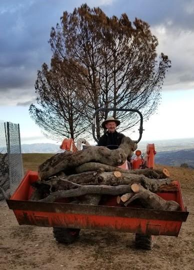Sam Ervin - Moving Baba's Tree Wood - 2-13-2018 - Magnus (2).jpg