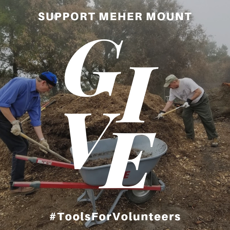 VOLUNTEERS spread mulch around Baba's Tree to hold in the moisture and provide a home for organisms that support the health of the tree. Your donation supports phase two of Baba's Tree regeneration.