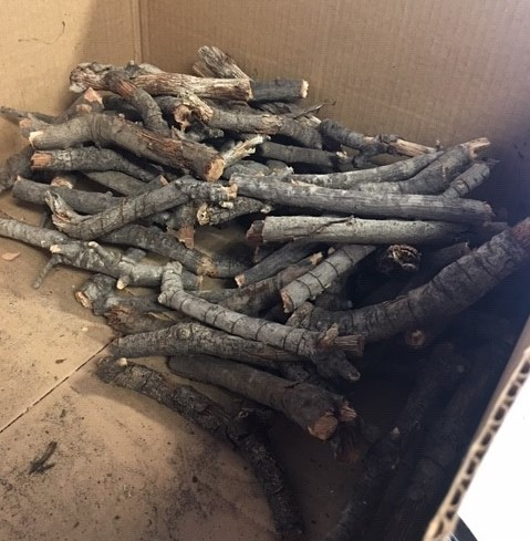 DHUNI  STICKS already harvested from Baba's Tree which will be shared with other Meher Baba centers and groups. (Photo: Jennifer Navarro-Marroquin, November 2018)