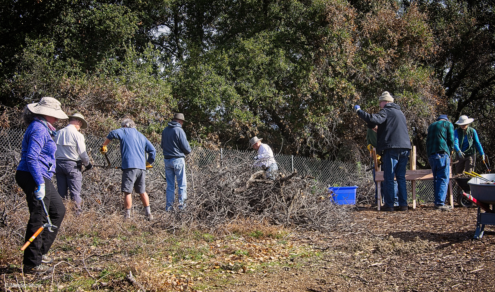 THE FALLEN LIMBS AND BRANCHES of Baba's Tree at Meher Mount are being harvested and cut into 1,200  dhuni -sized sticks to send to other Meher Baba groups for their  dhuni . (Left to right): Agnes Montano, Sam Ervin, Kyle Morrison, Jim Whedon, Jim Whitson, Fred Stankus, David Springhorn, David Trombley, and Kristina Somma. (Photo: Juan Mendez, January 12, 2019)