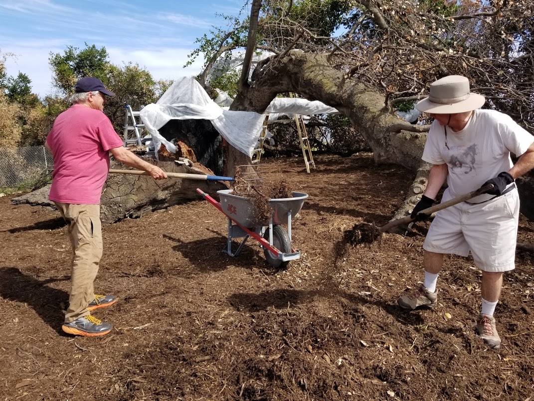ROBERT TURNAGE & JIM WHITSON are helping to spread 24-cubic yards of professional mulch under Baba's Tree at Meher Mount to hold in moisture and provide nutrients. (Photo: Margaret Magnus, April 21, 2018)